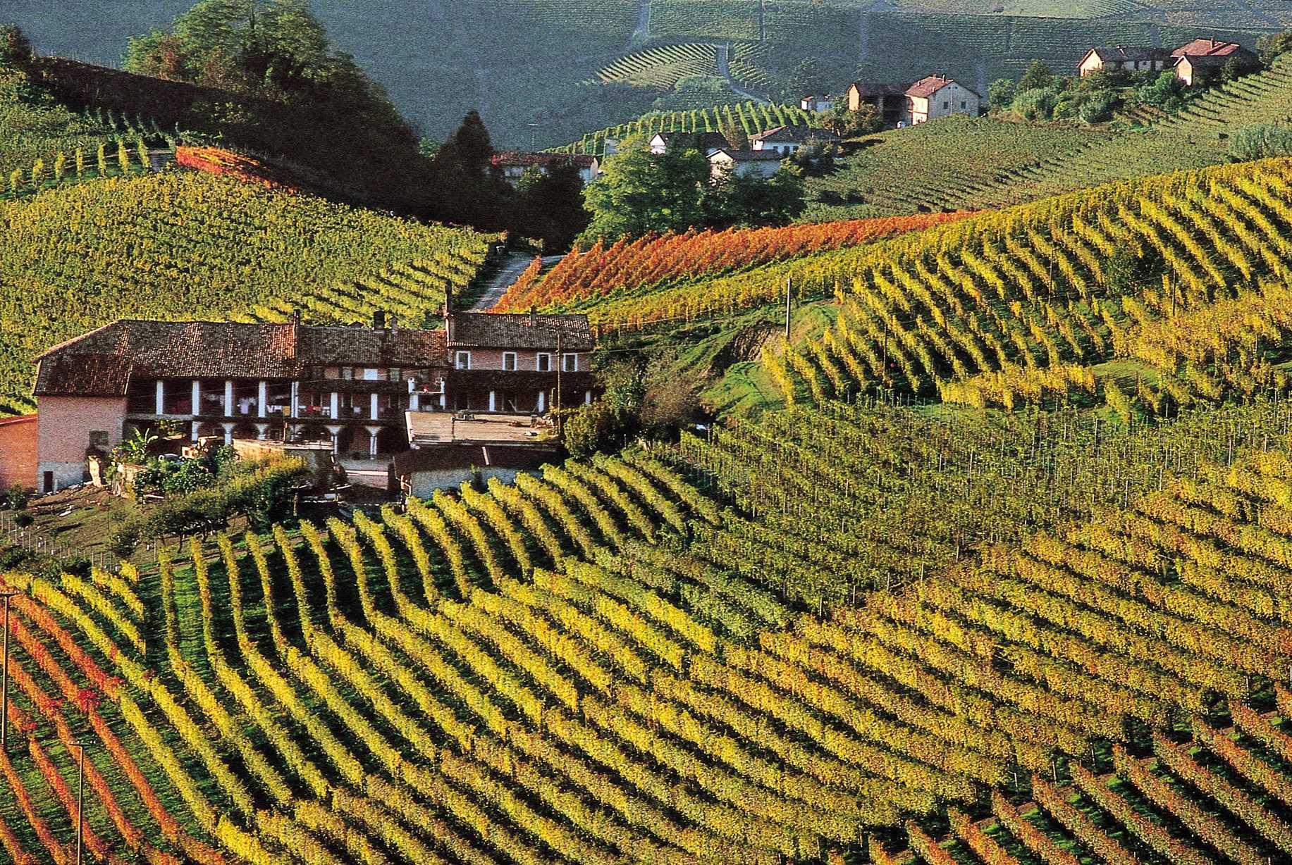 Rosso Piemonte - Nebbiolo, Barbera, Barbaresco e Barolo