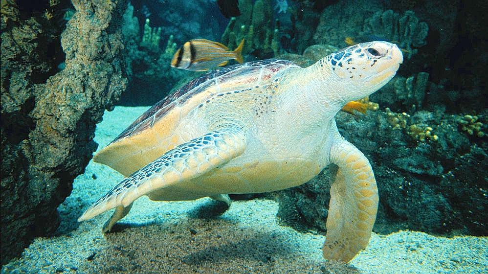 Il meraviglioso acquario di genova for Acquario tartarughe grandi
