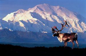 5 avventure alaska