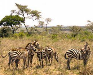 safari a cavallo in kenya