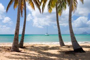 Martinica fiore dei caraibi