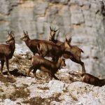 fauna-parco-naturale2