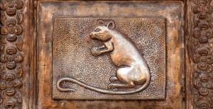 Karni Mata tempio dei topi india