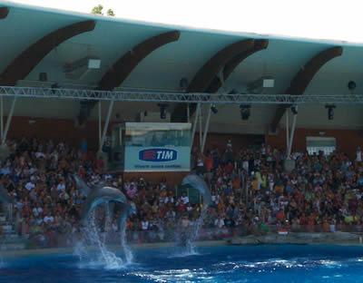 vacanze a Riccione, il fantastico Acquario Oltremare