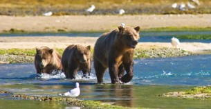Le meraviglie dell'Alaska