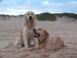 spiaggia cane pet friendly