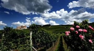 Brasile il paese del vino