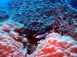 cousteau-diving-caraibi_1