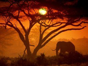 sole-inverno-kenya