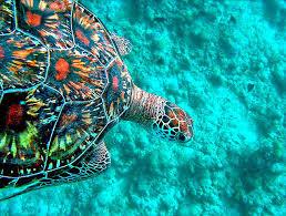 vacanza-last-muinute-maldive