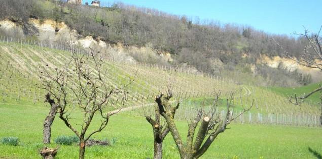Tour enogastronomico tra le cantine di Piacenzano