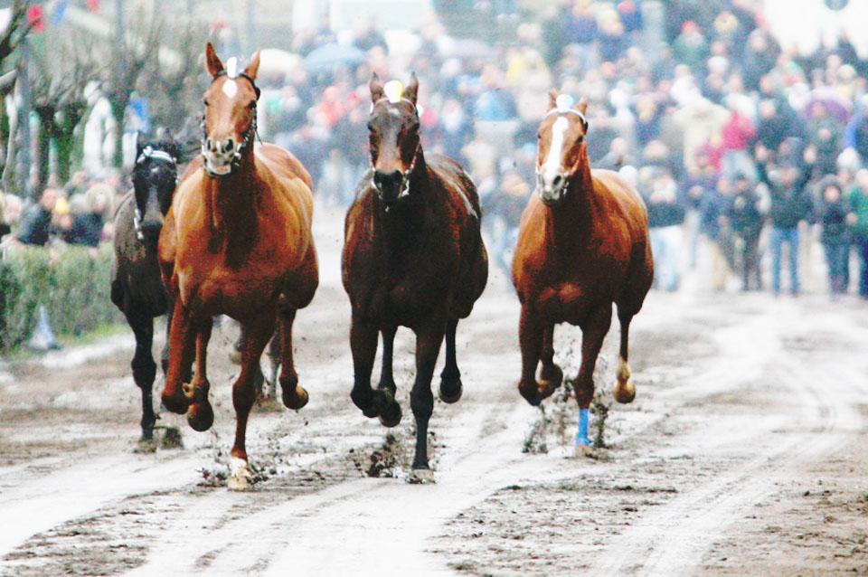 la corsa dei cavalli a vuoto di Ronciglione